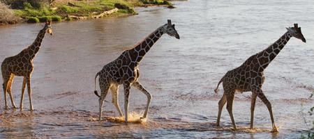 https://sandragesafaris.com/wp-content/uploads/2017/02/giraffes.jpg